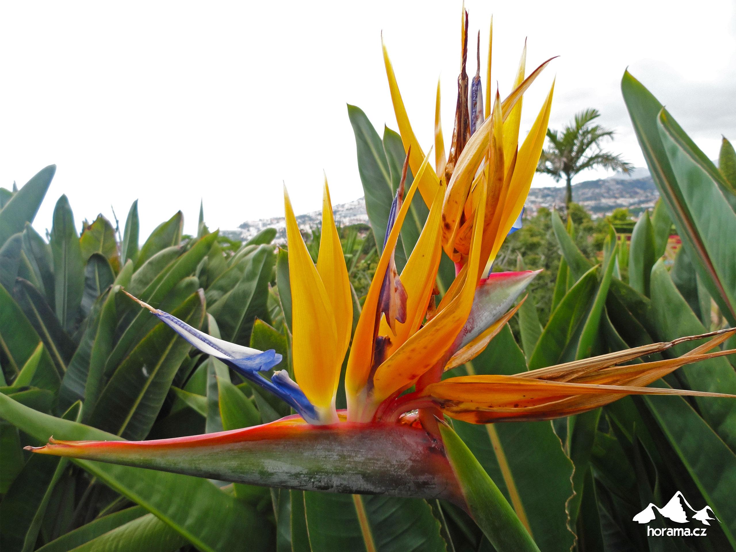 Funchal Jardim Botanico Madeira