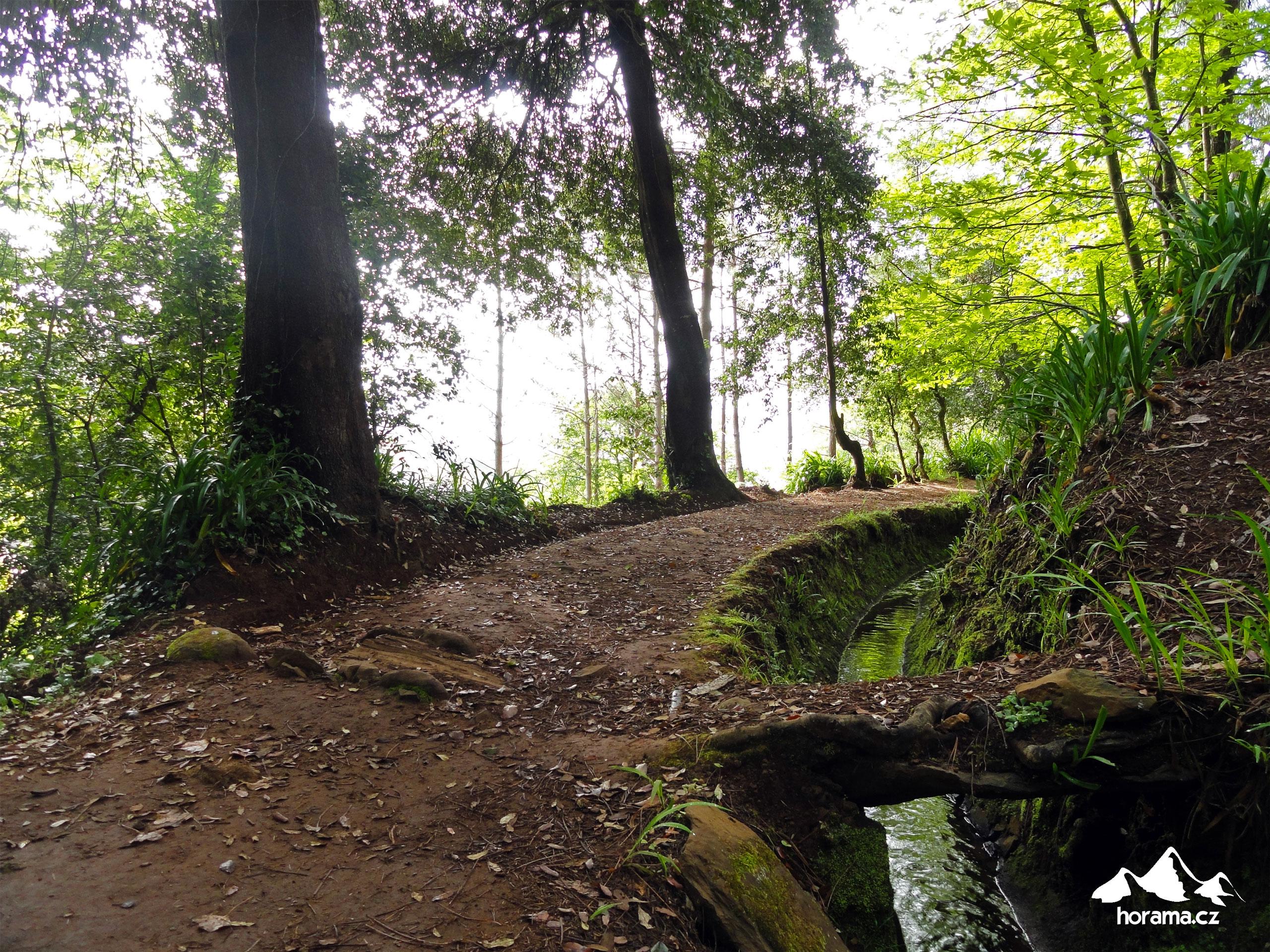 Levada Da Serra Do Faial Madeira