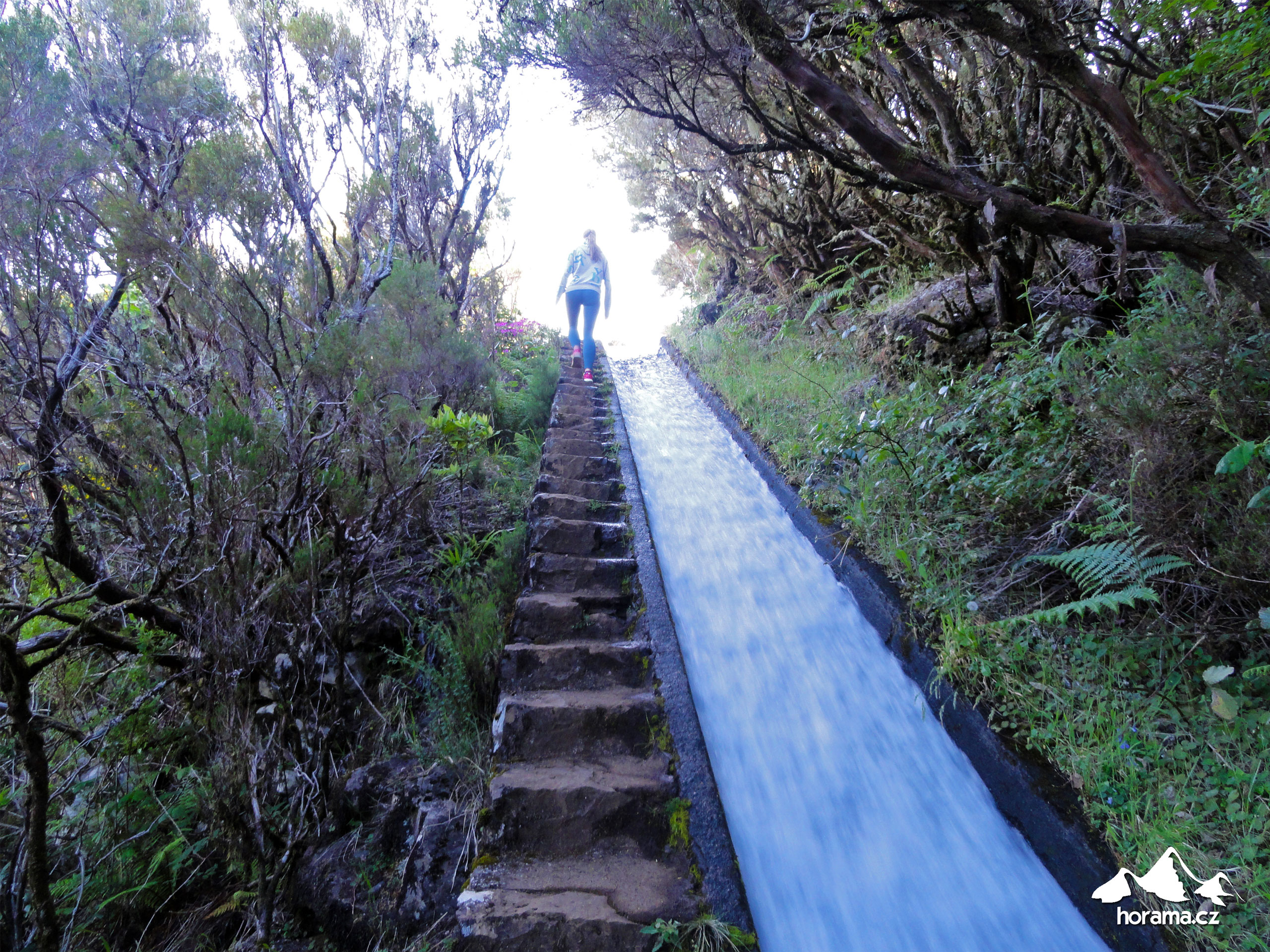 Levada Do Alecrim Rabacal Madeira