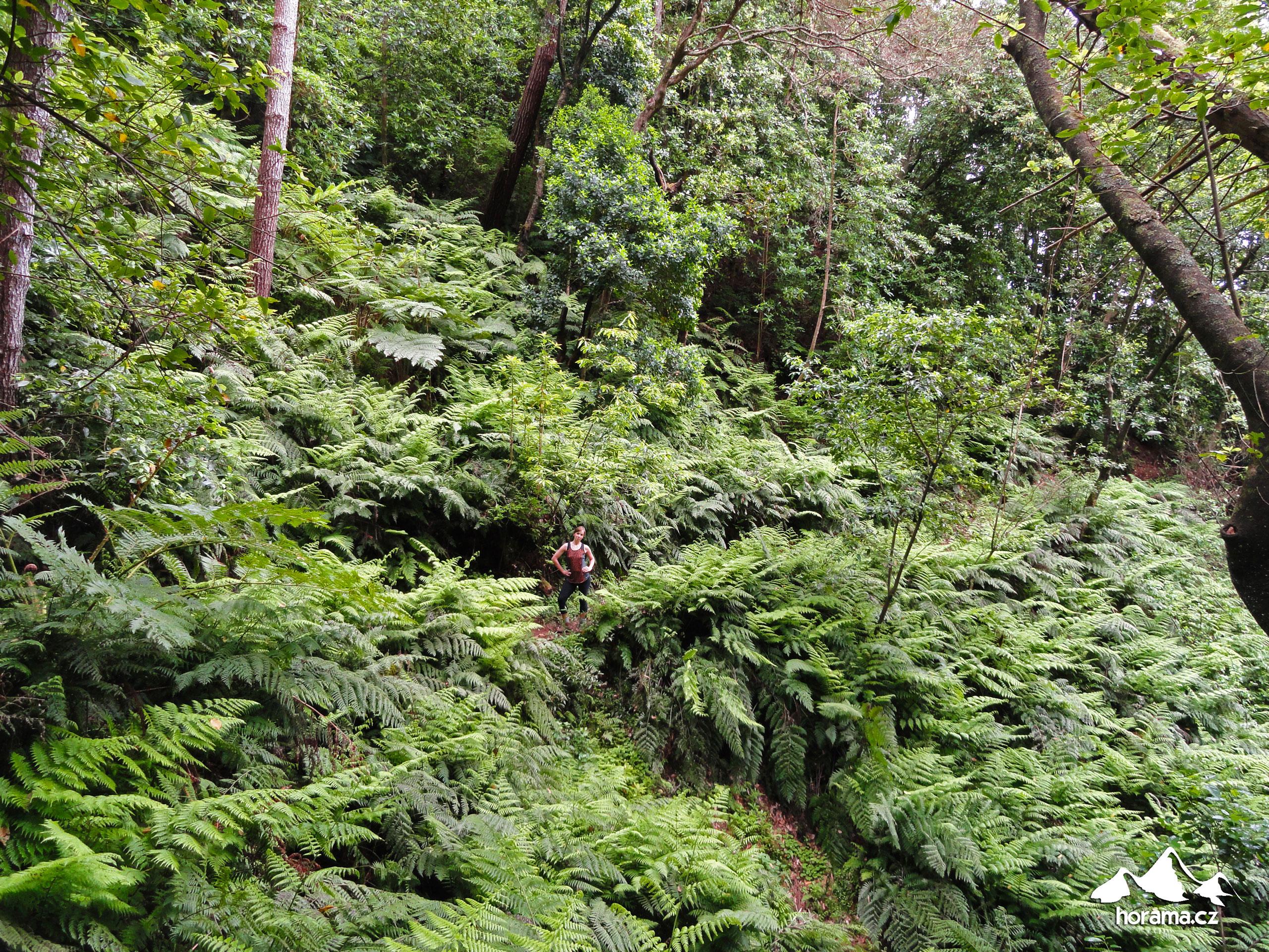 Vereda Das Funduras Madeira