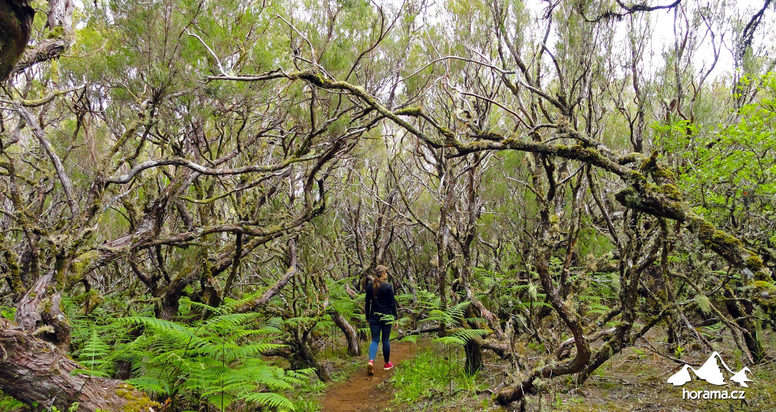 Vavřínový prales Madeira
