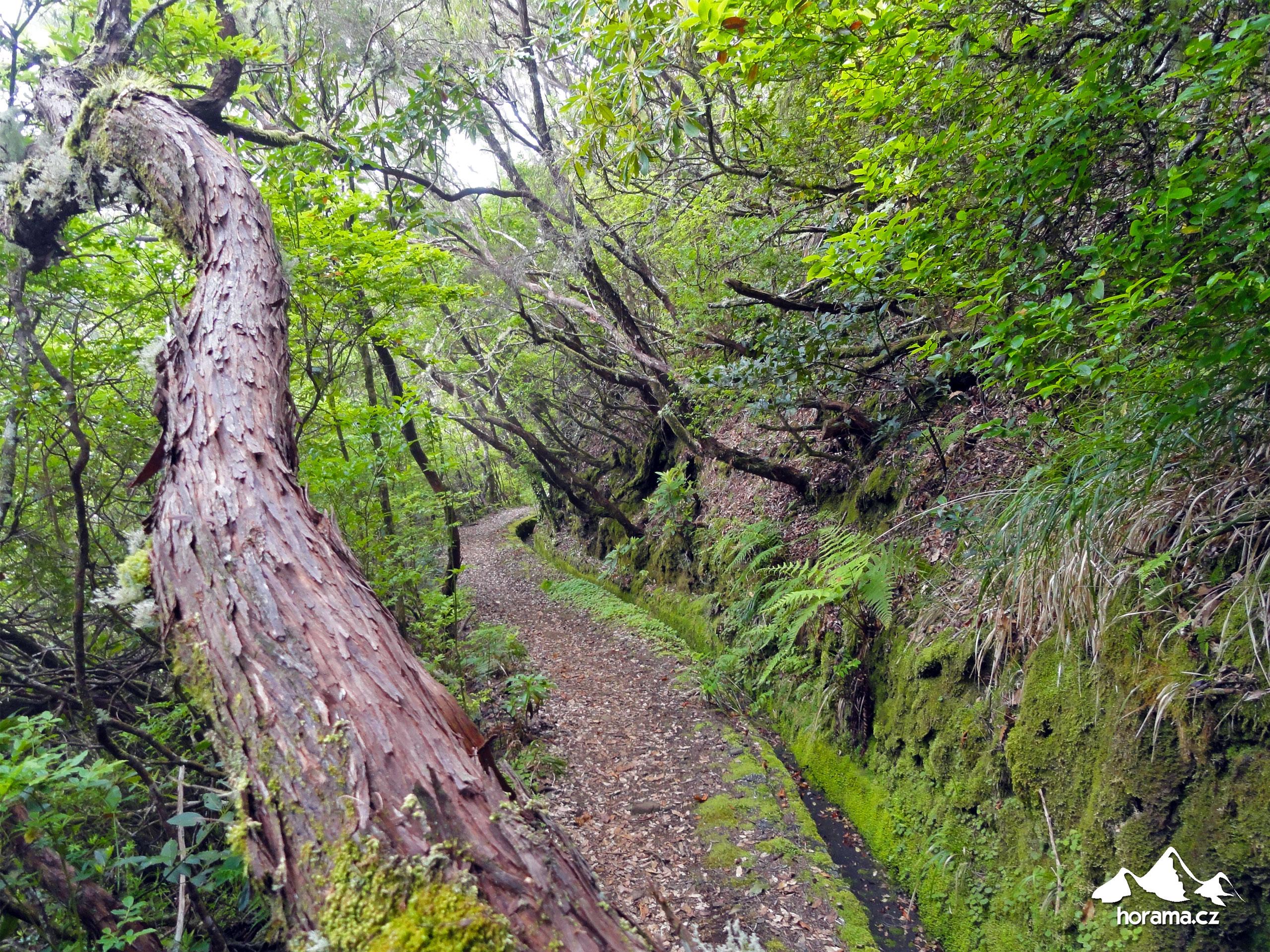 Levada Norte Boca Da Encumeada Madeira