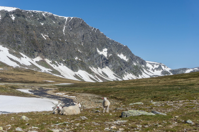 Přes louky, řeky i jezera na vrchol Blåhøa v pohoří Trollheimen